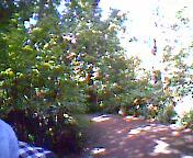 植物園特集③