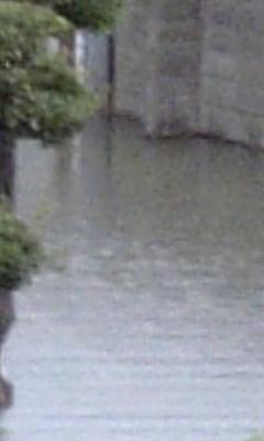 大雨の影響…