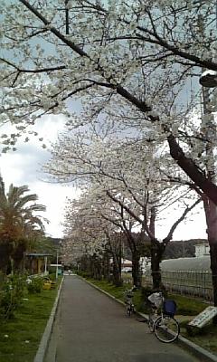 紀三井寺の遊歩道
