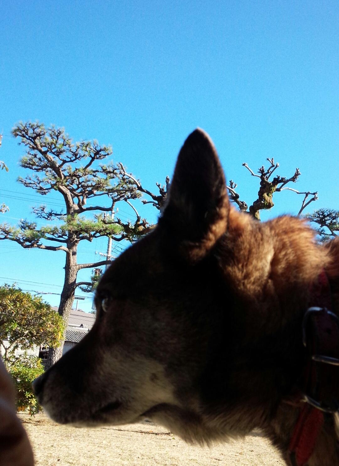 dog&sky